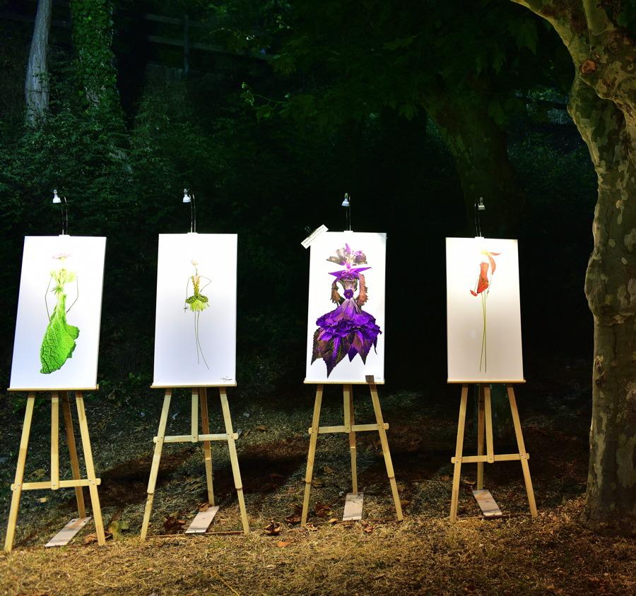 herbettes-expo-nuit